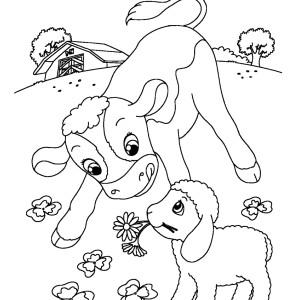 Il vitellino schizzinoso